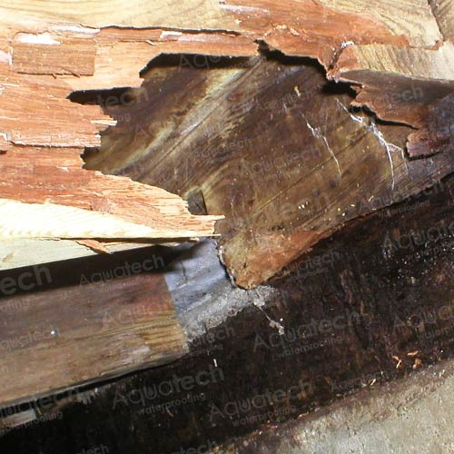 Rotted-Wood